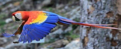 The Honduras Bird Man