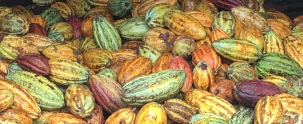 cacao equals chocolate