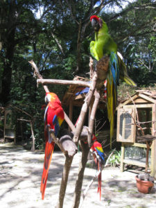 Macaw Mountain Bird Park